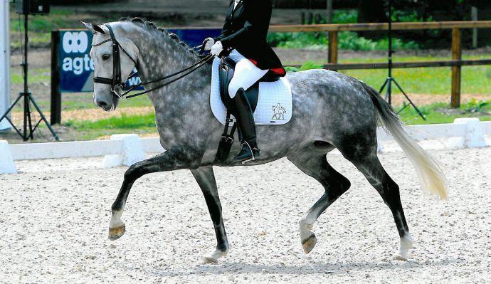 Paarden sportstal